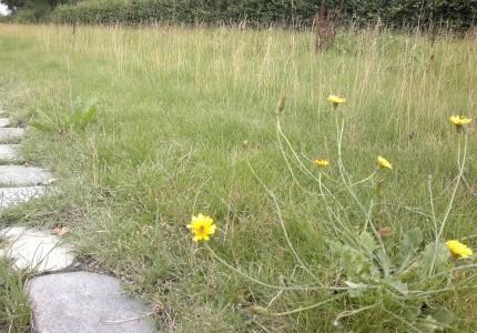 Bred græsrabat klippes 4 gange /år. Søndre kgd.